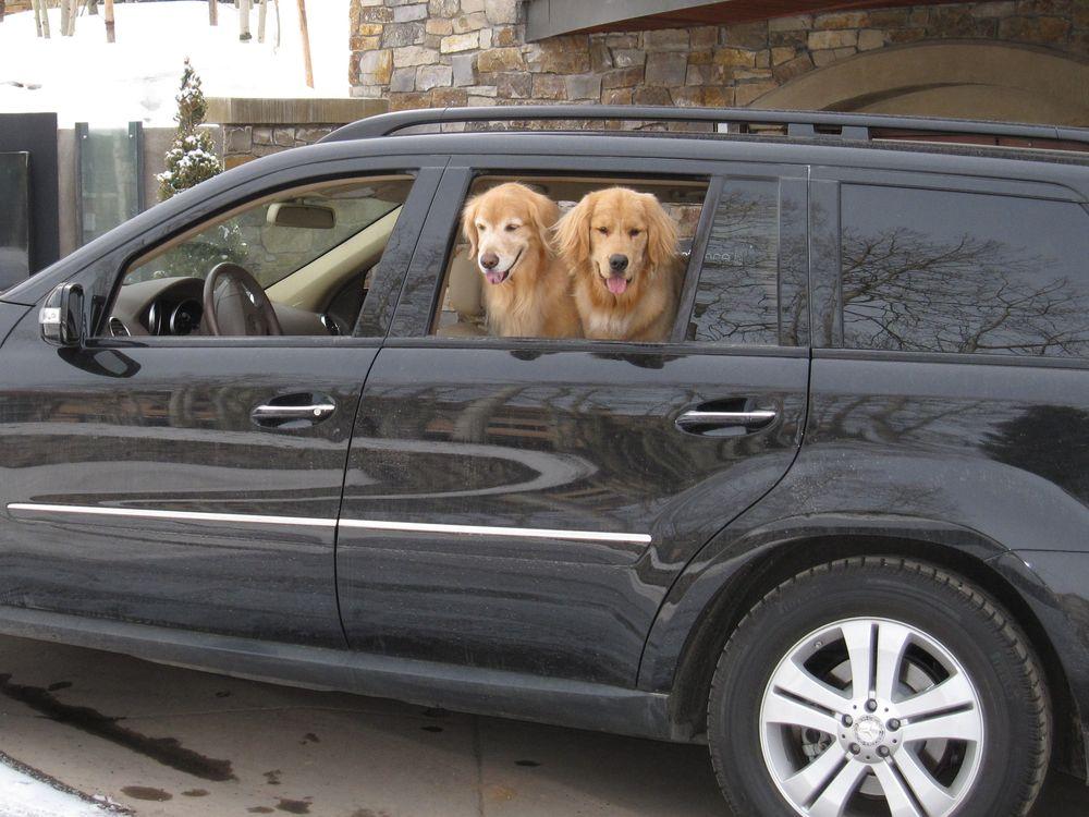 Peltons dogs lumiere
