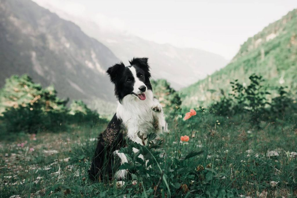 Lumiere Hotel Telluride Special Pet Care