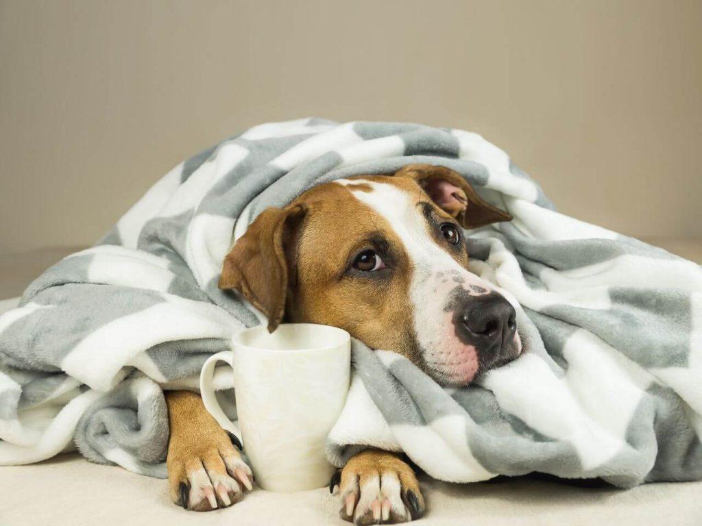 Lumiere Hotel Telluride The Best Dog Treat
